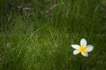 Frangi in the Grass